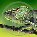 kameleon gad gady jaszczurka jaszczurki