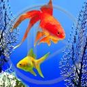 zwierzęta ryba ryby akwarium rybki rybka zwierzak zwierzaki zwierzę