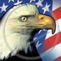flaga ptaki ptak usa orzeł drapieżnik