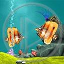 ryba ryby akwarium rybki rafa koralowa
