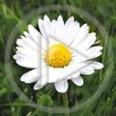kwiat kwiaty kwiatek kwiatuszek kwiatki kwiatuszki