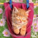 zwierzęta kot kotek koty kiciuś zwierzak kotki zwierzę