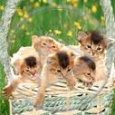 zwierzęta kot kotek koty zwierzak kotki zwierzaki kociaki
