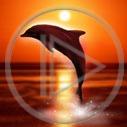 słońce zachód wakacje urlop morze ocean delfin ssak słoneczko morski ssaki zachód słońca delfinek