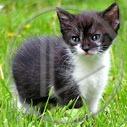 zwierzęta kot kotek koty zwierzak kotki kociak zwierzę zwierzątko zwierze