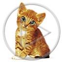 zwierzęta kot kotek koty zwierzak kotki zwierzę