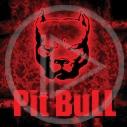 zwierzęta pies piesek psy pit bull zwierzę