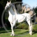 zwierzęta koń konie konik zwierzak koniki zwierzę