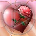 serce kwiat miłość róża serduszko serca