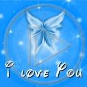 miłość motyl owady motylek motyle owad i love you motylki