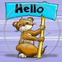 zwierzęta wiewiórka hello zwierzę wiewiórki