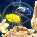 zwierzęta ryba ryby rybki zwierzę