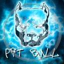 zwierzęta pies piesek psy pit bull pieski rasa zwierze