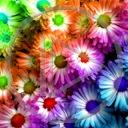 kwiat kwiaty kwiatek roślina rośliny kwiatki kwiatuszki