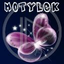 motyl owady motylek motyle owad motylki