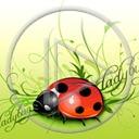 zwierzęta owady biedronka owad biedronki zwierze