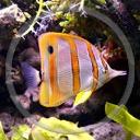 zwierzęta ryba ryby akwarium rybki rybka zwierze