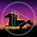 zwierzęta koń konie konik ogier koniki zwierze ogiery