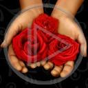 kwiat kwiaty kwiatek róża roślina kwiatuszek rośliny kwiatki róże kwiatuszki