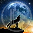 zwierzęta noc księżyc wilk Wilki zwierze księżyce