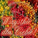 miłość kwiaty życzenia wszystkie tulipany dla ciebie z okazji okazja z okazji... zyczenia podaruj