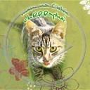 miłość love kot kotek słodka Sweet buziaki cute słodki miłosna