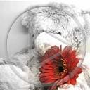 miłość miś kwiatek misiu misiaczek miś z kwiatkiem
