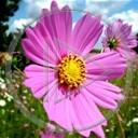 kwiat kwiaty roślina natura piękno
