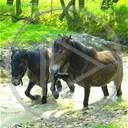 zwierzęta koń trawa konie fale konik kopyta fala staw koniki błoto klacz woda wodny
