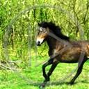 zwierzęta las koń trawa konie konik łąka drzewa galop koniki klacz wybieg pastwisko