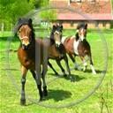 zwierzęta drzewo koń trawa konie konik galop koniki klacz wybieg