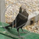 zwierzęta ptaki ptak ptaszek ptaszki