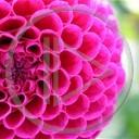 kwiat kwiaty kwiatek natura kwiatki różowy