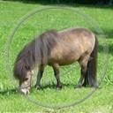 zwierzęta koń konie konik koniki zwierze