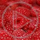 Malina owoce owoc smaczne natura maliny czerwone