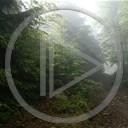 krajobraz las widok przyroda natura plener mgła