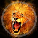 zwierzęta kot lew koty drapieżniki grzywa lwy drapieżnik dzikie koty dziki kot