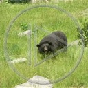 zwierzęta miś misiek niedźwiedź misie misio niedźwiedzie miśki