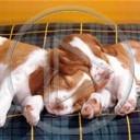 zwierzęta pies piesek psy pieski zwierzęta.psy