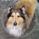 zwierzęta pies piesek psy pieski rasa