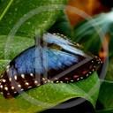 zwierzęta motyl motylek motyle motylki