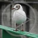 zwierzęta ptak ptaszki najlepsze mewa