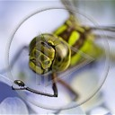 zwierzęta owady owad ważka ważki