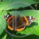 zwierzęta motyl owady motylek motyle owad