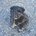zwierzęta pies piesek szczeniak piesio szczeniaczek moli