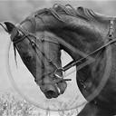 zwierzęta koń konie zwierze ukłon