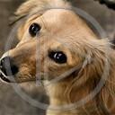 zwierzęta pies piesek psy pieski psiunia