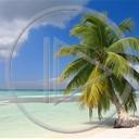 palma morze drzewo plaża krajobrazy