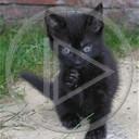 zwierzęta koty mały czarny kotki kociaki