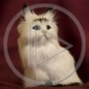 zwierzęta kot koty kotki kociak